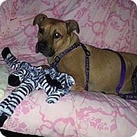 Adopt A Pet :: China - Bardonia, NY