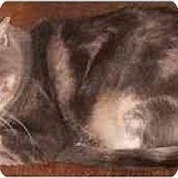 Adopt A Pet :: Precious - Milford, OH