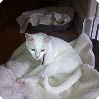 Adopt A Pet :: Lillian - Columbia, SC