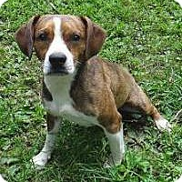 Adopt A Pet :: JR - Lancaster, OH