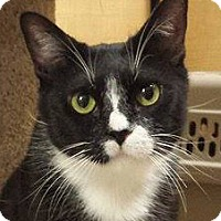 Adopt A Pet :: Isabelle - Irvine, CA