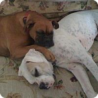 Adopt A Pet :: (CL) Daisy - Brentwood, TN