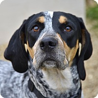 Adopt A Pet :: Remington - Meridian, ID