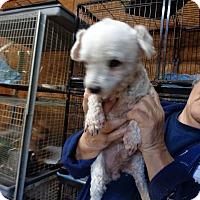 Adopt A Pet :: Hoosier - Crump, TN