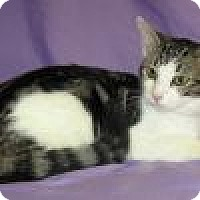 Adopt A Pet :: Electra - Powell, OH