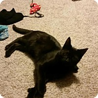 Adopt A Pet :: Yogi - Delmont, PA