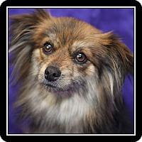 Adopt A Pet :: Marlo - San Diego, CA