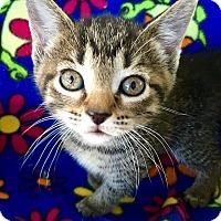 Adopt A Pet :: Chrissie - Tampa, FL