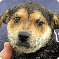 Adopt A Pet :: McKee - Germantown, MD