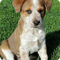 Adopt A Pet :: Dusty - Bend, OR
