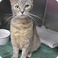 Adopt A Pet :: Pickles 69743 - Westampton, NJ