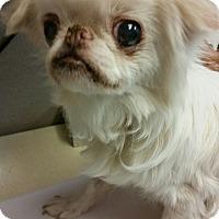 Adopt A Pet :: Mitzi - Tucson, AZ