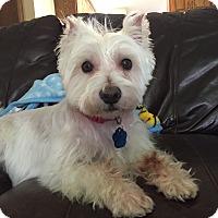 Adopt A Pet :: Frankie-Pending Adoption - Omaha, NE