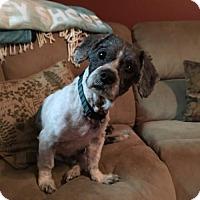 Adopt A Pet :: Luke - Newfield, NJ
