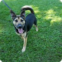 Adopt A Pet :: Nova (adoption is pending) - Buffalo, NY