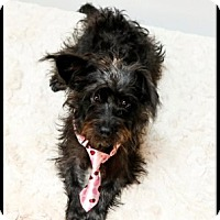 Adopt A Pet :: Myles - Richardson, TX