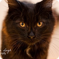 Adopt A Pet :: Apollo - Brimfield, MA
