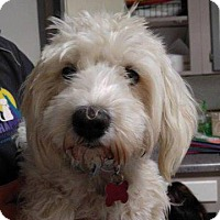 Adopt A Pet :: Kate - Big Spring, TX
