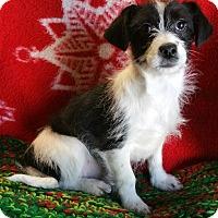 Adopt A Pet :: Glitter - Los Angeles, CA