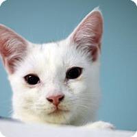 Adopt A Pet :: Angel Boy 161746 - Atlanta, GA