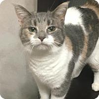 Adopt A Pet :: Trinity - Cincinnati, OH