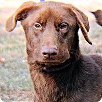 Adopt A Pet :: Diva - Fredericksburg, VA