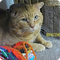 Adopt A Pet :: Benzino - Spring Brook, NY