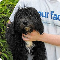 Adopt A Pet :: Griffen - Abilene, TX