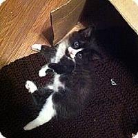 Adopt A Pet :: Fara - Summerville, SC