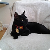 Adopt A Pet :: Oswald - Modesto, CA