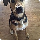 Adopt A Pet :: Shep - loves dogs and kids!