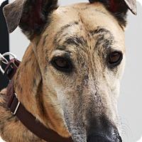 Adopt A Pet :: Ferb - Rancho Santa Margarita, CA