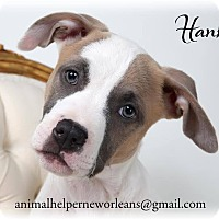 Adopt A Pet :: Hank - New Orleans, LA