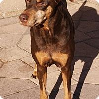 Adopt A Pet :: Kya - Torrance, CA
