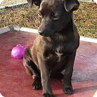 Adopt A Pet :: Sarah - Williston, FL