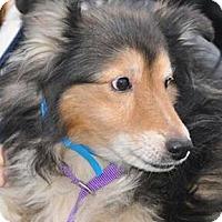 Adopt A Pet :: Hercules - COLUMBUS, OH