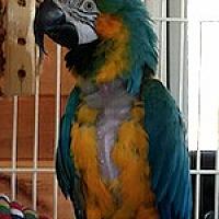 Adopt A Pet :: Bertie - Asheville, NC