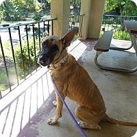 Adopt A Pet :: Remy - Lebanon, CT