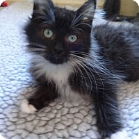 Adopt A Pet :: Mimi - Colmar, PA
