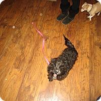 Adopt A Pet :: Toto - Perris, CA