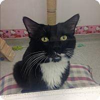 Adopt A Pet :: Napolean - Newport Beach, CA