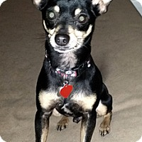 Adopt A Pet :: Billy - Cincinnati, OH