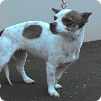 Adopt A Pet :: Millie - Huntington Beach, CA