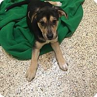 Adopt A Pet :: Otis - Thousand Oaks, CA