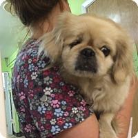 Adopt A Pet :: Charlotte - Oak Ridge, NJ