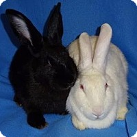 Adopt A Pet :: Alexis - Woburn, MA