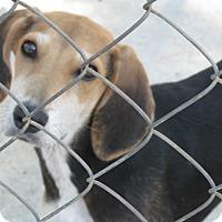 Adopt A Pet :: Boston - Groton, MA