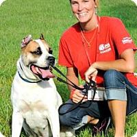 Adopt A Pet :: Gino - Titusville, FL