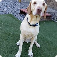 Adopt A Pet :: Dempsey - Towson, MD