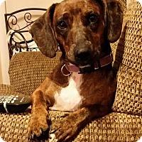 Adopt A Pet :: Eleanor Turner - Urbana, OH
